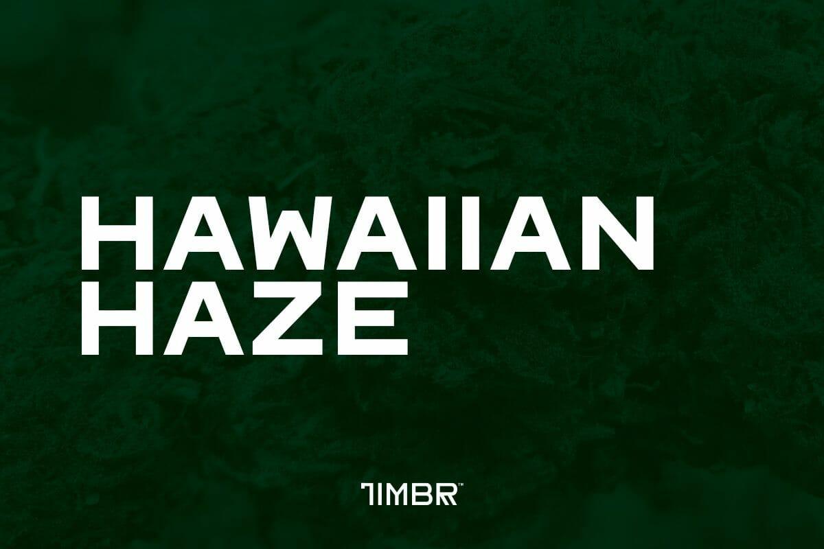 Hawaiian Haze CBD Strain | Timbr Organics